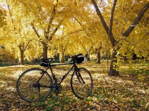 紅葉とサイクリング、いいなー